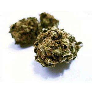 harlequin light cannabis